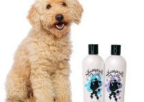 5 Best Dog Shampoos for Labradoodles (Reviews Updated 2021)