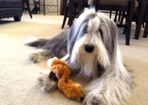 Dog Toys For Bearded Collies