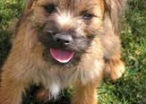 5 Best Dog Toys for Border Terriers (Reviews Updated 2021)