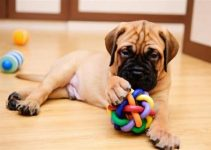 5 Best Dog Toys for Bullmastiffs (Reviews Updated 2021)