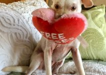 5 Best Dog Toys for Italian Greyhounds (Reviews Updated 2021)