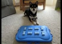 Dog Toys For Shiba Inus
