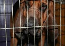 Dog Crate For Bloodhounds