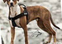 Dog Harness For Catahoula Leopard