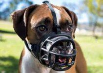 Dog Muzzle For Catahoula Leopard