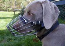 Dog Muzzle For Weimarane
