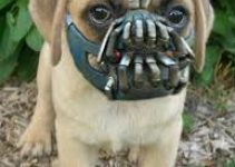 Dog Muzzle For Puggles