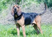 5 Best Dog Toys for Bloodhounds (Reviews Updated 2021)