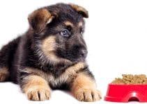 German Shepherd Puppy Food