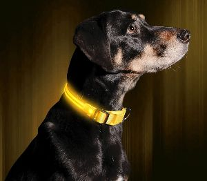 Illumiseen Led Dog Collar Usb Rechargeable Available In 6 Colors & 6 Sizes Makes Your Dog Vis