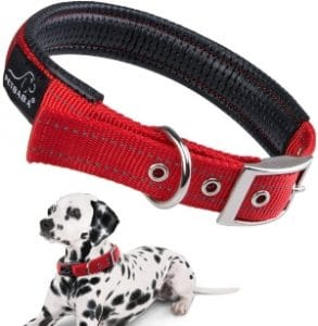 Petbabab Padded Dog Collar With Buckle, Soft To Protect Neck, Durable To Last Long In Walking Traini