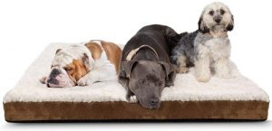 Paws & Pals Orthopedic Pet Bed Foam Mattress For Dogs & Cats Quilted Rectangular Fits Crate Carri