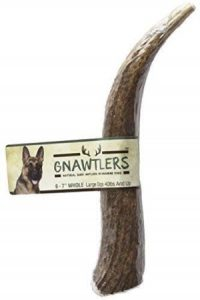 Pet Parents Gnawtlers Premium Elk Antlers For Dogs, Naturally Shed Elk Antlers, All Natural Elk An