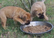 Puppy Food For Bullmastiffs