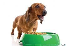 Puppy Food For Dachshunds