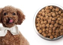 Puppy Food For Poodle