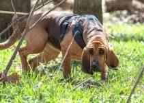 5 Best Puppy Foods for Bloodhounds (Reviews Updated 2021)
