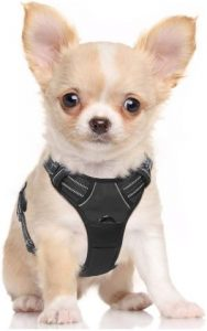 Rabbitgoo Dog Harness No Pull Pet Harness Adjustable Outdoor Pet Vest 3m Reflective Oxford Material (1)