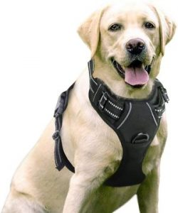 Rabbitgoo Dog Harness No Pull Pet Harness Adjustable Outdoor Pet Vest 3m Reflective Oxford Material