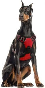 Rabbitgoo Dog Harness No Pull Pet Harness Adjustable Outdoor Pet Vest 3m Reflective Oxford Material