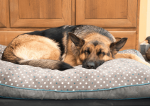5 Best Dog Beds for Mastiffs (Reviews Updated 2021)