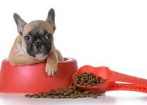 Puppy Foods For French Bulldog