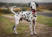 5 Best Dog Beds for Dalmatians (Reviews Updated 2021)