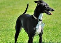 5 Best Dog Foods for Greyhounds (Reviews Updated 2021)