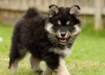 Best Dog Muzzle For Finnish Lapphunds