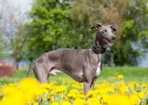 Best Dog Muzzle For Greyhounds