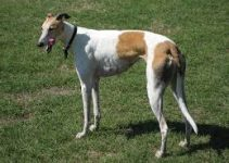 5 Best Dog Shampoos for Greyhounds (Reviews Updated 2021)