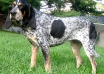 Dog Bed For Bluetick Coonhounds