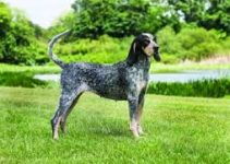 5 Best Dog Brushes for Bluetick Coonhounds (Reviews Updated 2021)