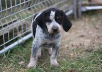5 Best Dog Collars for Bluetick Coonhounds (Reviews Updated 2021)