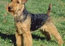 Dog Crate for Welsh Terriers