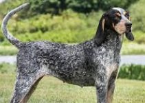 5 Best  Dog Muzzles for Bluetick Coonhounds (Reviews Updated 2021)
