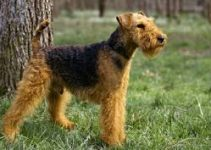 Dog Bed For Welsh Terriers
