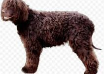 5 Best Puppy Foods for Irish Water Spaniels (Reviews Updated 2021)