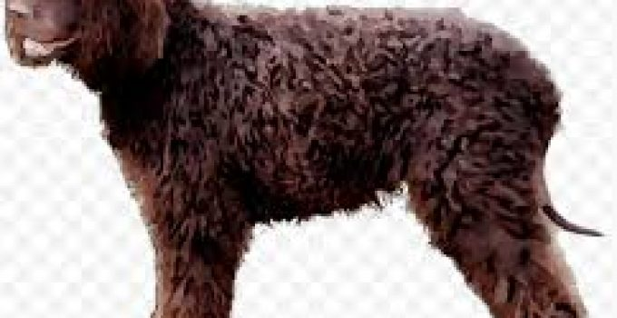 Puppy Food For Irish Water Spaniels