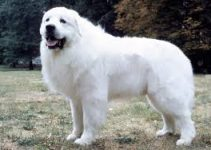 Best Dog Crate For Great Pyrenees