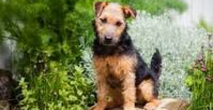 Best Dog Crate For Lakeland Terriers