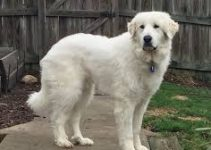 Best Dog Muzzle For Great Pyrenees