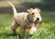 Best Dog Muzzle For Lakeland Terriers