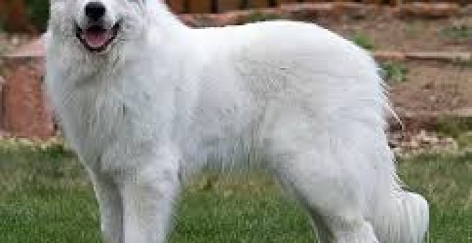 Best Dog Shampoo For Great Pyrenees