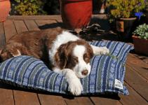 5 Best Dog Shampoos for Welsh Springer Spaniels (Reviews Updated 2021)
