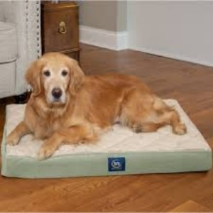 Serta Quilted Orthopedic Pillowtop Dog Bed