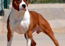 5 Best Dog Beds For American Staffordshire Terriers