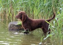 5 Best Dog Beds for American Water Spaniels (Reviews Updated 2021)