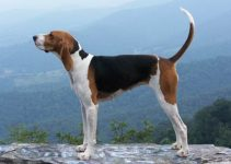 5 Best Dog Brushes for Treeing Walker Coonhounds (Reviews Updated 2021)