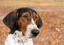5 Best Dog Collars for Treeing Walker Coonhounds (Reviews Updated 2021)